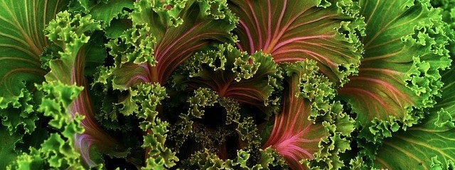 a shot of bright kale
